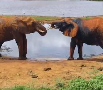 Zobacz na żywo najpiękniejsze zwierzęta z całego świata [KAMERY ONLINE]