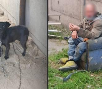 """Gwałcił i maltretował psy? Przerażające! """"Wszyscy wiedzieli"""". Sprawę bada policja"""