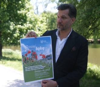 Kalisz: Miasto zachęca mieszkańców do wysiewania kwietnych łąk i rozdaje nasiona