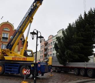 Człuchów. Droga świątecznego drzewka sprzed bloku przy Słowackiego na rynek (zdjęcia, video)