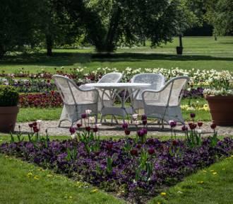 Jak wypoczywać w ogrodzie? Sprawdź, o co musisz zadbać, aby relaks był udany