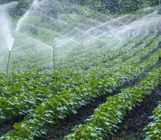 Szkolenia online dla rolników. Przez internet pomogą wypełnić wnioski