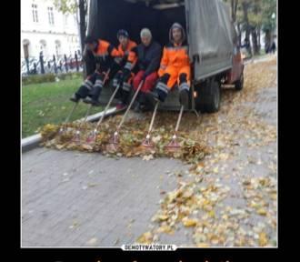 Początek jesieni. Grabienie liści, deszcz, przeziębienia... Cieszycie się? (MEMY)
