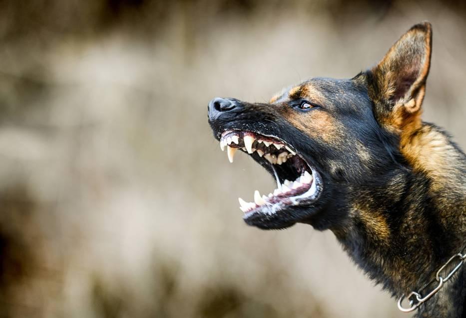 Te rasy psów są uznawane za agresywne