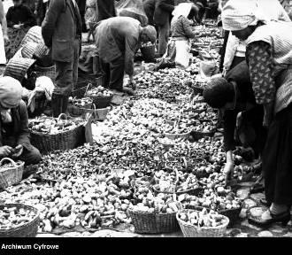 Kiedyś to były grzyby! Urodzajne zbiory na archiwalnych zdjęciach