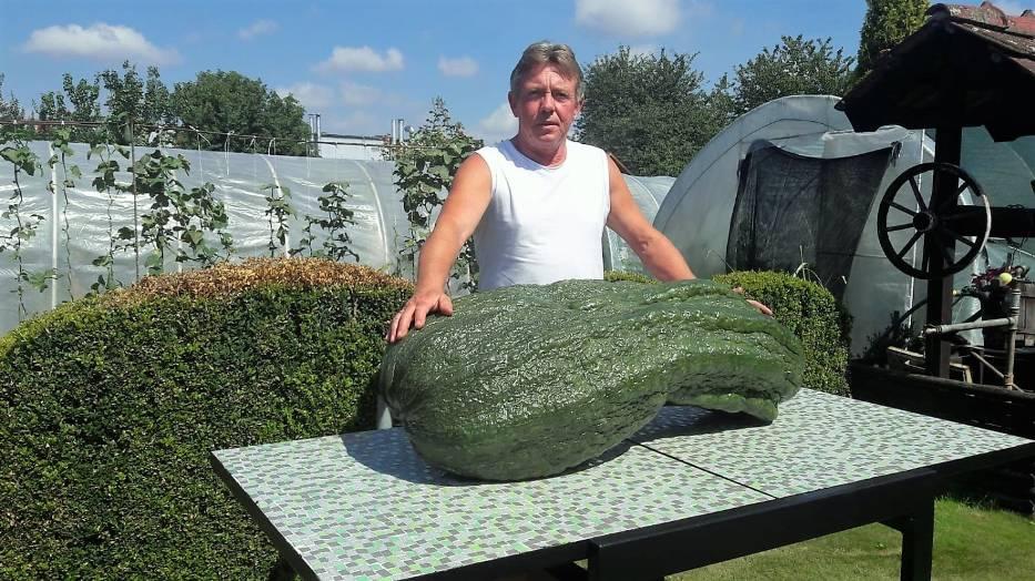 Kabaczek w ostatnim czasie mocno tył I osiągnął wagę 55 kilogramów! Jego obwód – licząc na wzdłuż wynosi 2,5 metra!