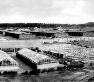 Sekretarka obozu Stutthof oskarżona o współudział w zabójstwach stanie przed sądem