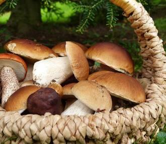 Dania z grzybami. Zobacz przepisy na rozmaite aromatyczne potrawy z grzybów!