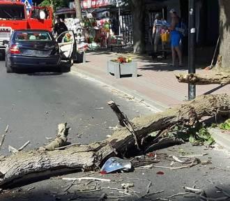 Wypadek w Jastrzębiej Górze (sierpień 2018). Na jadącego mercedesa spadła gałąź | ZDJĘCIA