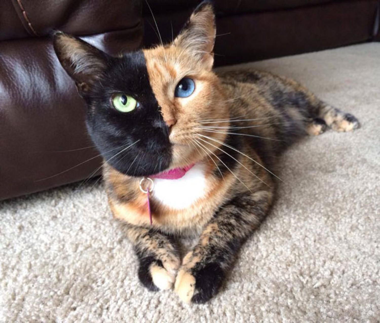Venus - kot o dwóch twarzach.