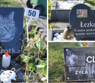To cmentarz dla zwierząt - jest jedyny w woj. śląskim! Zobacz te poruszające zdjęcia