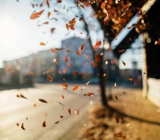 Idealne miejsca na jesienną wycieczkę po Lubuskiem. Oto nasz TOP 14!