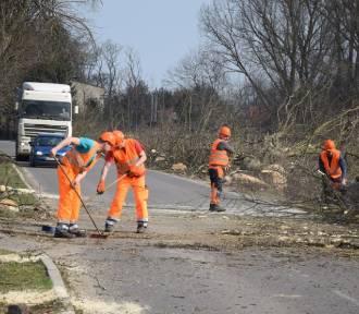 Żuławy. Wycinka na trasie Stróża Mikoszewo już trwa. Padnie 500 drzew. Uwaga na utrudnienia