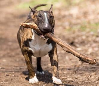 Nowe mandaty dla właścicieli psów. To nawet kilkaset złotych kary. Za co?
