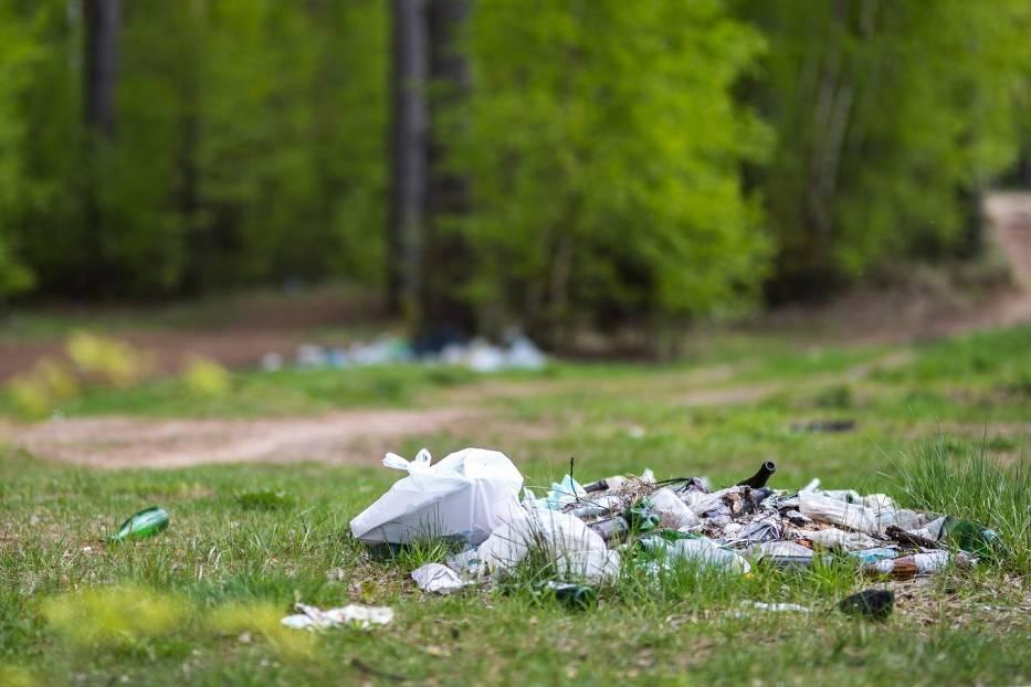 Wysypywanie śmieciZa zaśmiecanie lasu - nie tylko odpadami wielkogabarytowymi, plastikiem, szkłem, metalem i odpadkami gospodarskimi, ale także:> niedopałkami papierosów> skórkami od bananów i pomarańczy> ogryzkami jabłek> papierkami po gumie do żucia> innego rodzaju papieremgrozi grzywna do 5000 zł