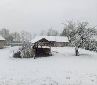 Sypnęło śniegiem w maju [zdjęcia]