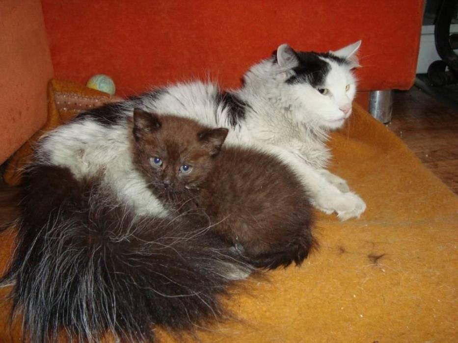 """Mała Izolda w domu tymczasowym Fundacji """"Kocia Mama"""" oczekuje na adopcję"""