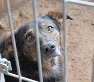 Psy z Radys szukają nowego domu na Pomorzu
