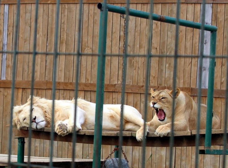 Zoo w Wojciechowie koło Lublina jest otwarte przez cały czas pomimo pandemii
