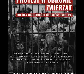 Będzie protest pod prokuraturą! W obronie zwierząt, przeciwko obojętności władzy!
