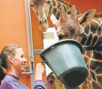 Śląski Ogród Zoologiczny budzi się do życia. Jak się zmienia zoo?