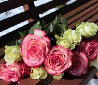 Kwiaciarnie w Jeleniej Górze, w których kupisz najładniejsze bukiety