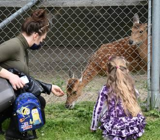 Zamość: ogród zoologiczny już otwarty dla zwiedzających