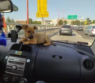 Galeria psiaków z Konina na Międzynarodowy Dzień Psa