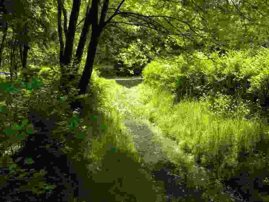 Jeden z opisywanych potoków