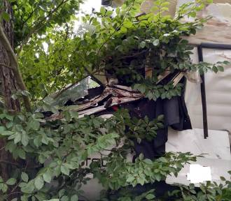 Ciężarówka wjechała w drzewo. Przewoziła gaz [ZDJĘCIA]