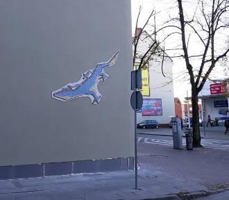 Krokodyl zostaje w Stargardzie. Można go oglądać na ulicy