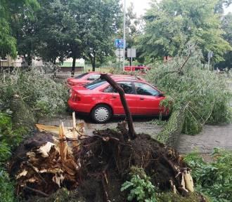 Nawałnica w Łódzkiem! Połamane drzewa, zniszczone samochody!