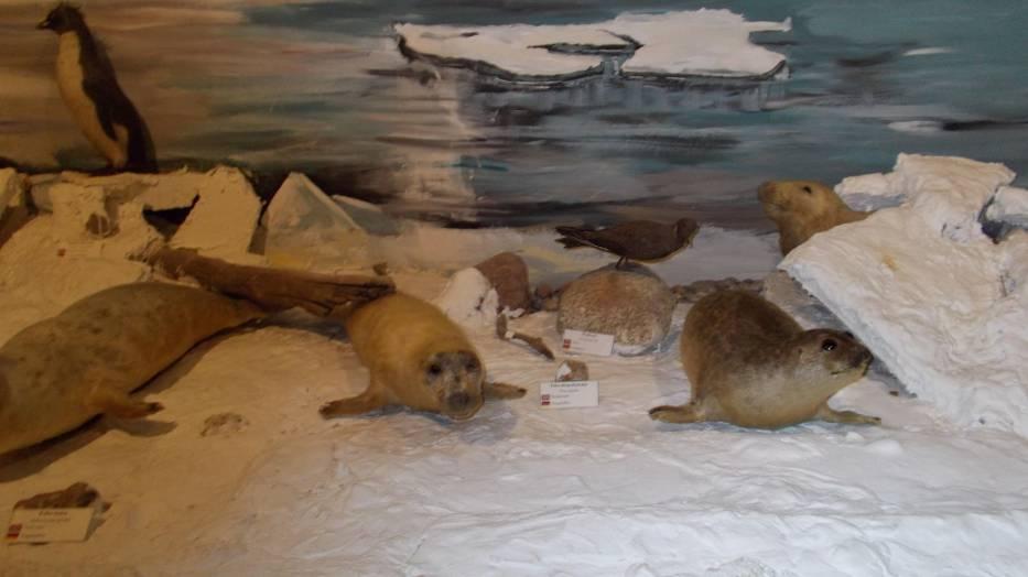 Padła też propozycja utworzenia na reprezentacyjnym placu wybiegu dla fok
