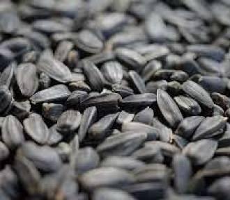 Tajemnicze nasiona z Chin mogą być zagrożeniem!