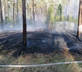 Pożar lasu. W akcji strażacy i dwa samoloty gaśnicze [ZDJĘCIA]