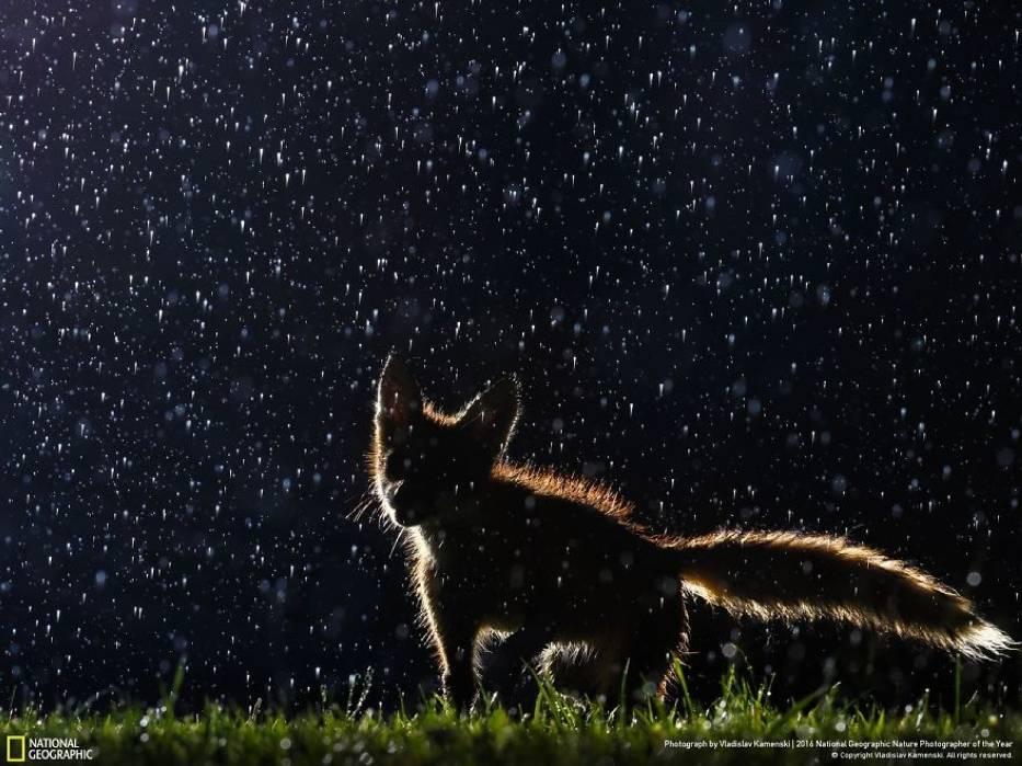 Przyrodnicza fotografia roku. Niesamowite zdjęcia natury, oto finałowa dwudziestka [GALERIA]