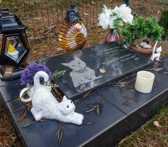 Zobaczcie niesamowite groby zwierząt. Są tu anioły, znicze, modlitwy do Boga i kwiaty