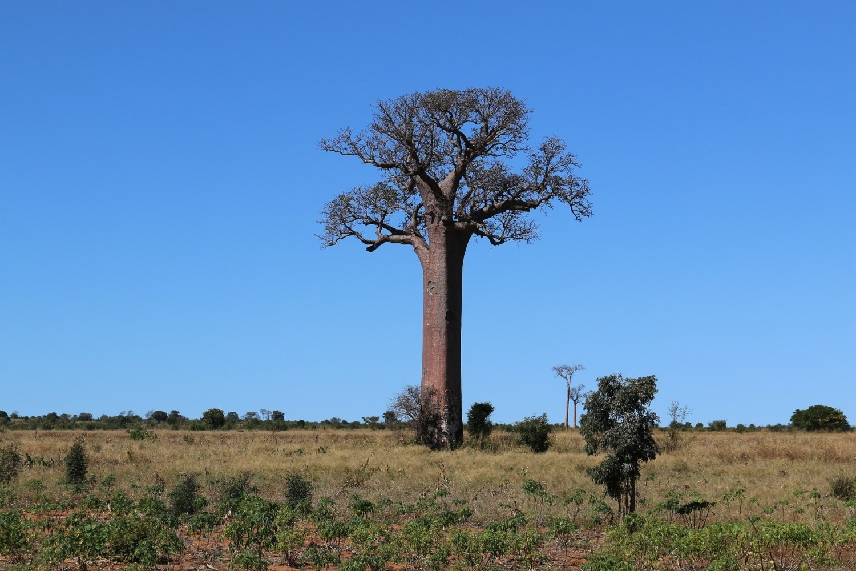 Baobaby - zbiorniki wody
