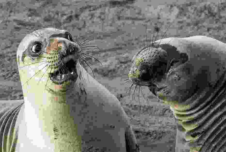 Dziwne zdjęcia zwierząt. Ich miny - to hit internetu!