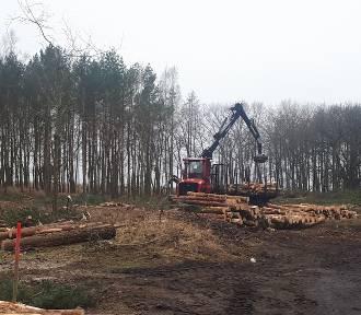 Mierzeja Wiślana. Rozpoczęły się prace związane z przekopem. Poleciały pierwsze drzewa... [ZDJĘCIA,
