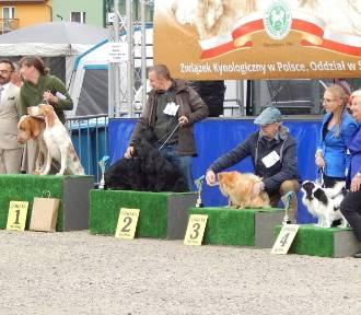 Drugi dzień wystawy psów rasowych w Ustce. Zobacz psie piękności!