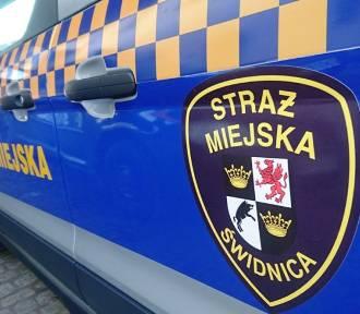 Tydzień z życia Straży Miejskiej w Świdnicy: zagubieni seniorzy, pijany awanturnik i przetreminowana