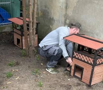 Budki dla wolno bytujących kotów są ustawiane w Dzierzgoniu