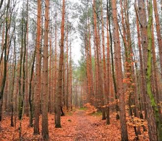 Bory Dolnośląskie: Nawet o tej porze roku jest tam pięknie! Zobaczcie! [ZDJĘCIA]