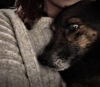 Mieszkaniec Sielinka w Dzień Niepodległości zastrzelił psa [FOTO]