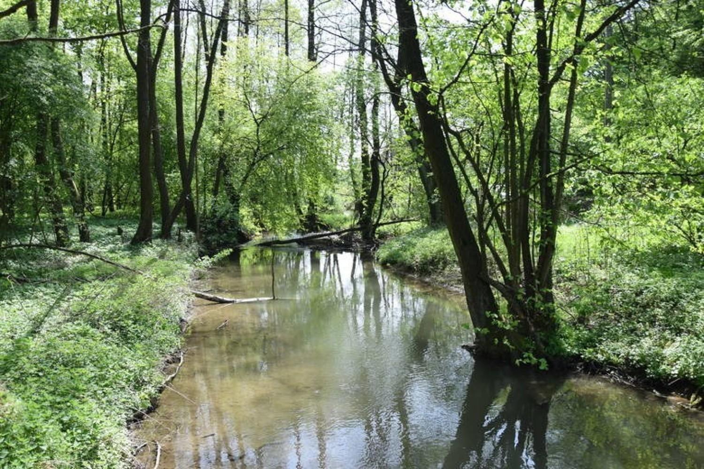 Dolina Prądnika na granicy Ojcowskiego Parku Narodowego i Prądnika Korzkiewskiego w gminie Wielka Wieś