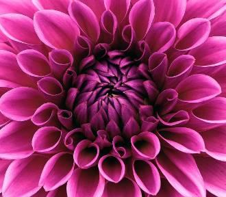 TOP 20 jesiennych kwiatów i krzewów, które musisz mieć w ogrodzie!