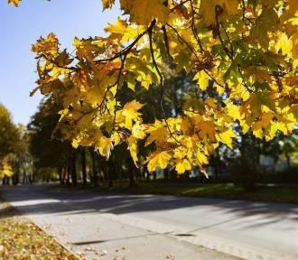 Pogoda na wtorek, 19 listopada. Będzie sporo słońca!