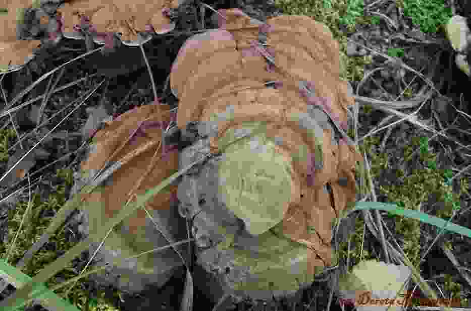 Pasożytnicze grzyby na pniu drzewaFot