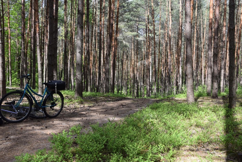 W maju zieleń na Wzgórzach Piastowskich jest najpiękniejsza